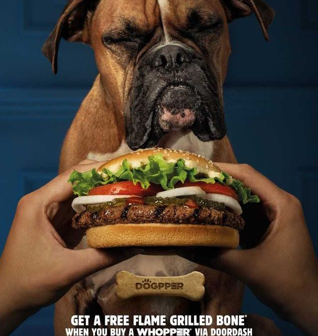 "Burger King Came Out With A Whopper Flavored Dog Bone, The ""Dogpper"" [VIDEO]"