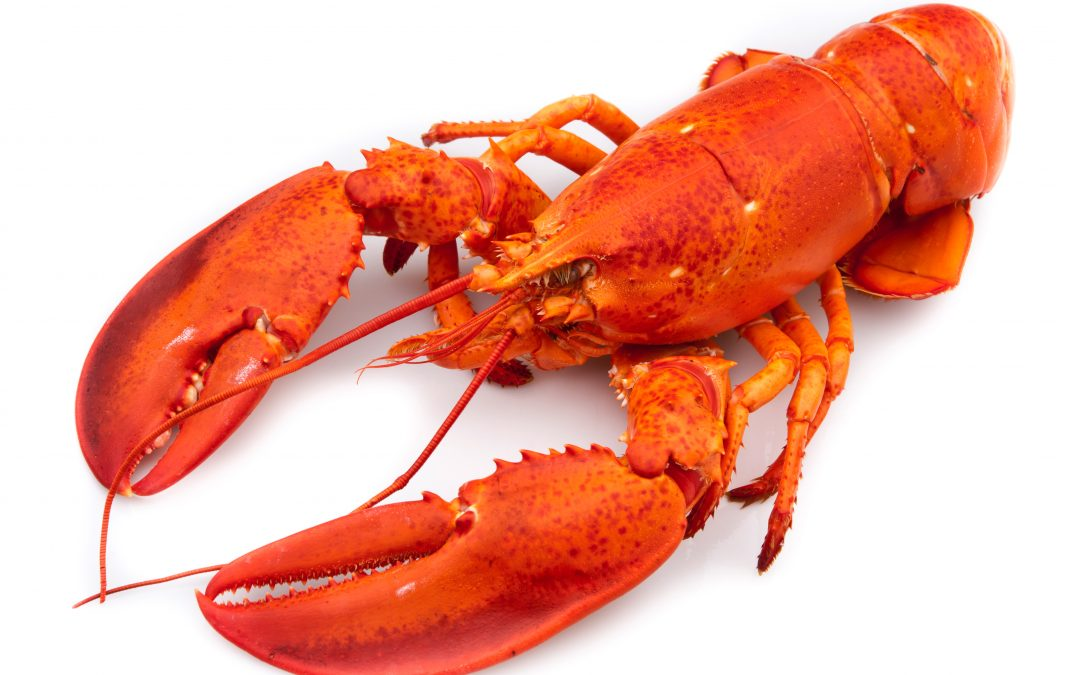 Drunk Woman Got Kicked Out Of Red Lobster And Stole A Live Lobster On Her Way Out